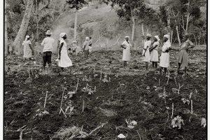 Women planting, Jacmel (1983)
