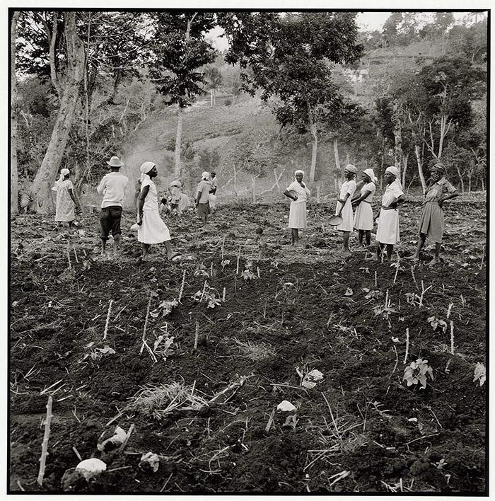 Read more about the article Women planting, Jacmel (1983)