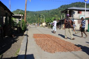 Grand'Anse, Haiti, cacao drying in the street (2014)