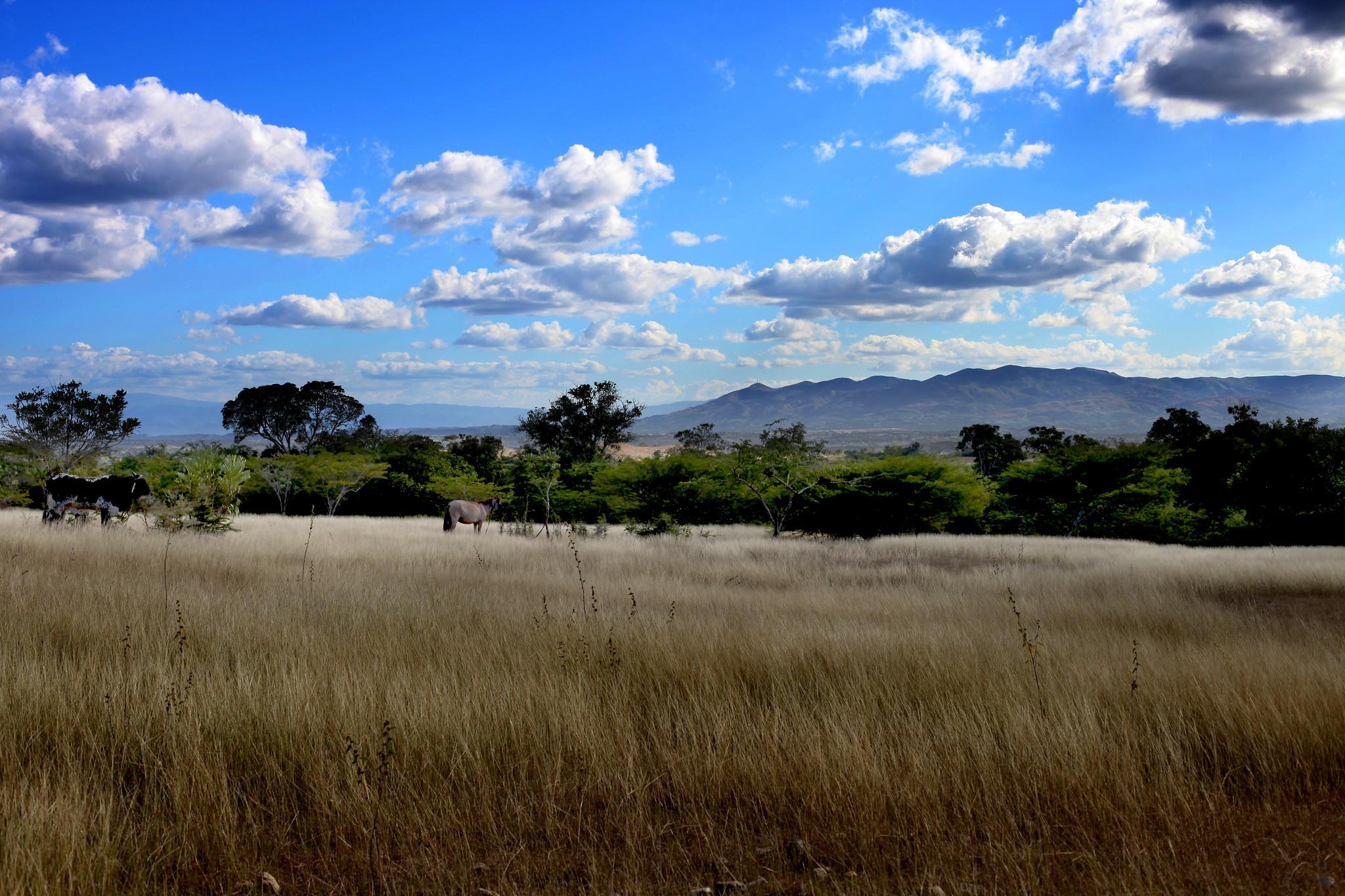 Landscape, Colladere