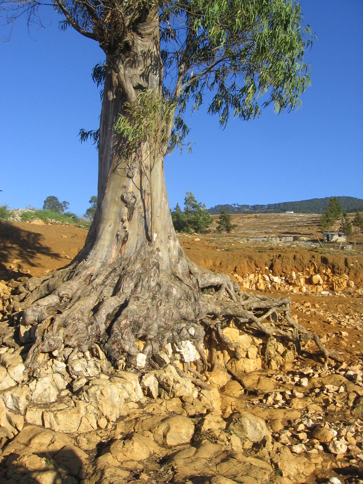 The Raincatchers Tree