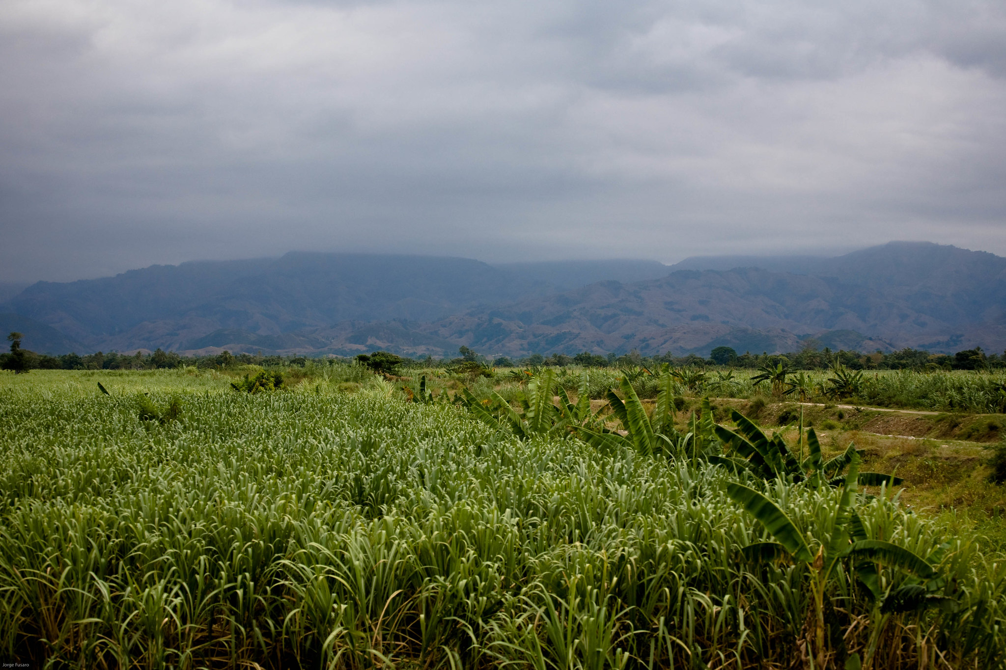 Haitian Garden and landscape
