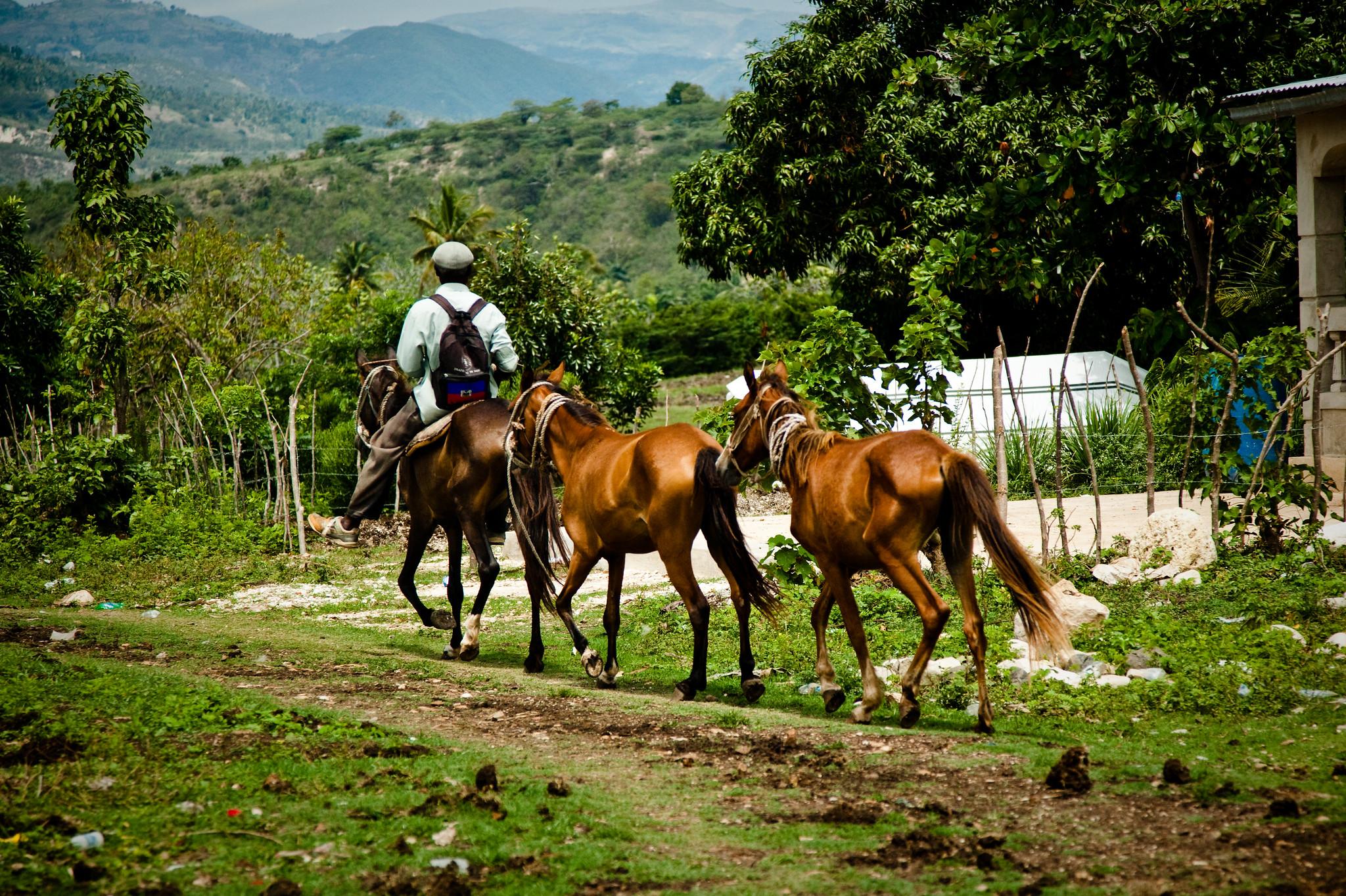 Man leading horses