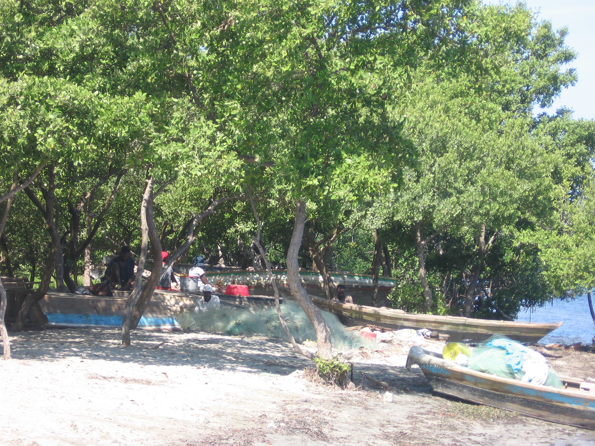 You are currently viewing Mangroves, Haiti