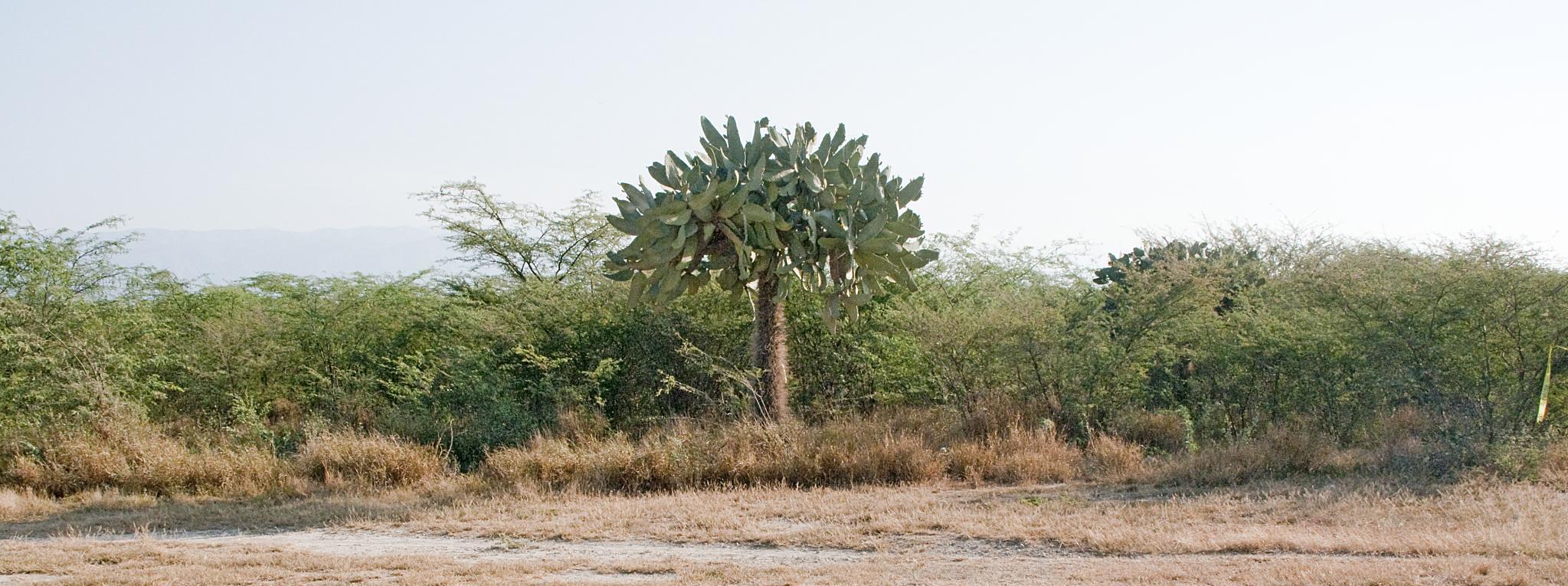 Haitian Forest